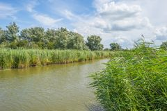 Free The Edge Of A Pond With Reed In A Green Grassy Field Below A Cloudy Blue Sky In Sunlight Stock Photo - 155491550