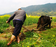 The Farmers Plough Their Fields In Stock Image