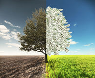 The Field And Money Tree