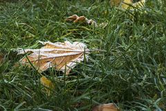 Free The First Frost Stock Images - 103066164