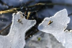 Free The First Frost And The First Ise.Figures Of Ice. Royalty Free Stock Photography - 107980137