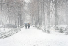Free The First Snow Of The Season Royalty Free Stock Photography - 48293087