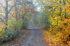 The Foggy Country Road Stock Photos
