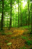 The Forest Royalty Free Stock Photo