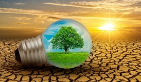 The Forest And The Trees Are In The Light. Concepts Of Environmental Conservation And Global Warming Plant Growing Inside Lamp Bul Royalty Free Stock Image