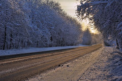 The Forest Road In Winter Stock Image