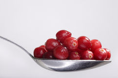 The Full Spoon Of Cranberry Stock Photos