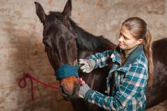 Free The Girl Cleans The Horse From Dust And Dirt With A Special Brush Royalty Free Stock Image - 189960426