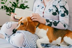 The Girl In Pajamas Is Reading A Book At Home With A Beagle Puppy Dog. Beagle Is Lies On Girl`s Knees. Royalty Free Stock Image