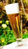 The Glistening Of Hops Royalty Free Stock Image