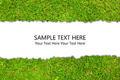 The Grass Background Stock Photography
