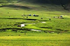 The Grassland Of Mulan Paddock Royalty Free Stock Image