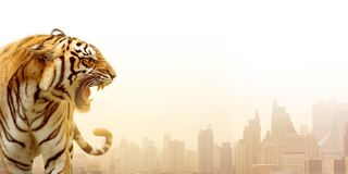 Free The Great Tiger On The City Background Royalty Free Stock Image - 172193636
