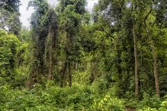 The Green Jungle Of Thailand Royalty Free Stock Photos