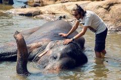 Free The Guy Bathes An Elephant Stock Image - 69057711