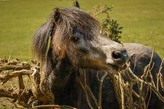 Free The Happy Horse Stock Photo - 106486210