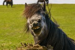 Free The Happy Horse Royalty Free Stock Images - 106486329