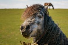 Free The Happy Horse Royalty Free Stock Photo - 106486555