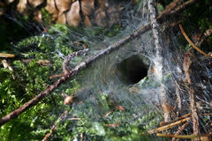 The Height Of A Funnel Net Spider Stock Photos