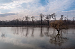 The High Water Level Of The River And Flooded Trees Stock Photography