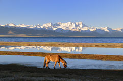 The Horse Of Namco Lake Royalty Free Stock Photos