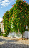 The House Wreathed With Campsis Creeper On The Street Of The Col Royalty Free Stock Photos