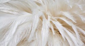 Free The Image Of The Bird`s Feathers. Royalty Free Stock Image - 162900566