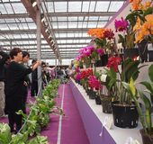 The International Orchid Show In Taiwan Royalty Free Stock Photos