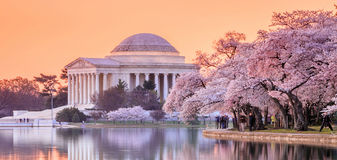 The Jefferson Memorial During The Cherry Blossom Festival Royalty Free Stock Images