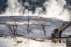 Free The Landscape Nature Around Mammoth Hot Springs In Yellowstone National Park In Wyoming , United States Of America Royalty Free Stock Photos - 168008818