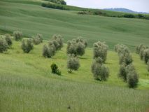 Free The Landscape Of The Val D'Orcia. Royalty Free Stock Images - 35327119