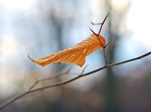 Free The Last Leaf Stock Images - 1473634