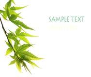 Free The Leaf Stock Photo - 6663610