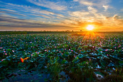 The Lotus Pond And Cloudscape Sunrise Royalty Free Stock Photos