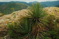 Free The Magueyes Stock Photo - 99824560