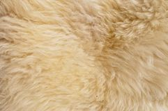 The Manufactured Skin Of A Sheep Royalty Free Stock Images