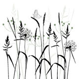 The Meadow In Summertime, Plant Vector Royalty Free Stock Photo