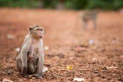 The Monkey Embraces A Cub Stock Photos