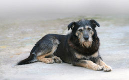 Free The Old Dog Stock Photo - 6411600
