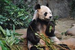 The Panda Eating Bamboo Leaves Stock Photo