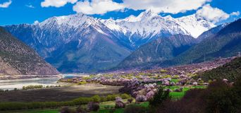 The Peach Blossoms Are In The Yarlung Zangbo Grand Canyon Royalty Free Stock Images