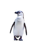 The Penguin Stock Image