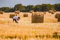 Free The Photographer In The Field Photographs A Sheaf Of Hay. Royalty Free Stock Photos - 128493478