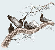 The Pigeons On The Tree Branch In The Spring Day Stock Photography