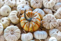 Free The Pumpkin Imposter Royalty Free Stock Photo - 106838405