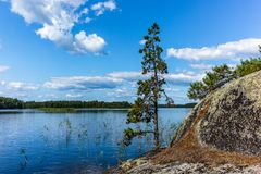 Free The Quiet Wild Forest And Lonely Trees On The Shore Of The Saimaa Lake In The Linnansaari National Park In Finland - 1 Stock Images - 154976504