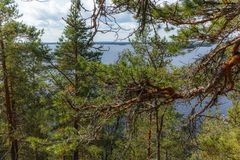 Free The Quiet Wild Forest And Lonely Trees On The  Top Of A Rocky Island In The Linnansaari National Park In Finland - 9 Stock Photography - 154976842