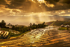 The Rice Fields On Terraced In North Thailand, Mae Jam, Chiang M Royalty Free Stock Images