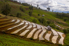 The Rice Fields On Terraced In North Thailand, Mae Jam, Chiang M Royalty Free Stock Photography