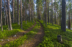 Free The Road In The Karelian Forest. Stock Image - 60121201